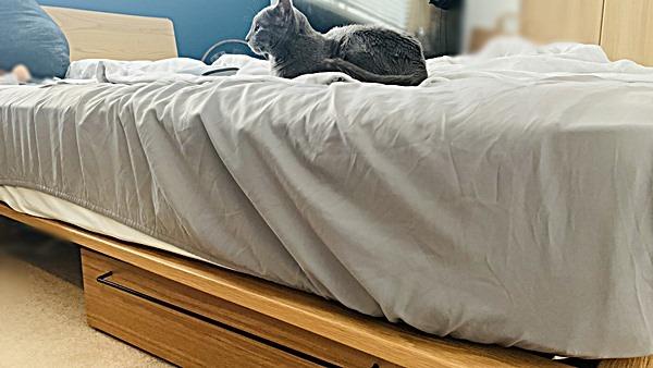ボックス エア シーツ リズム ユニクロ│快適・最強すぎとSNSで話題!エアリズム寝具が全店舗で販売開始!